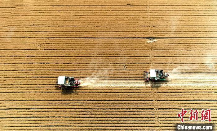 专家:中国粮食供应有保障 价格上涨难持续